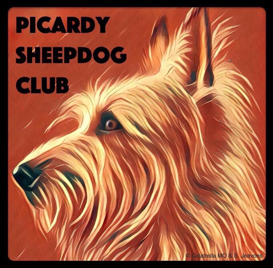 UK Picardy Sheepdog Club